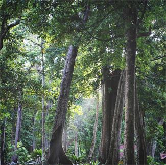 Hiking Koh Similan island