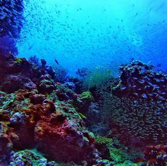Koh Bon Diving Thailand
