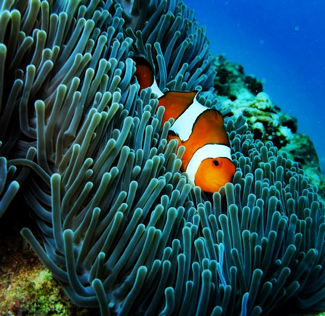 Marine life in the Similan Islands