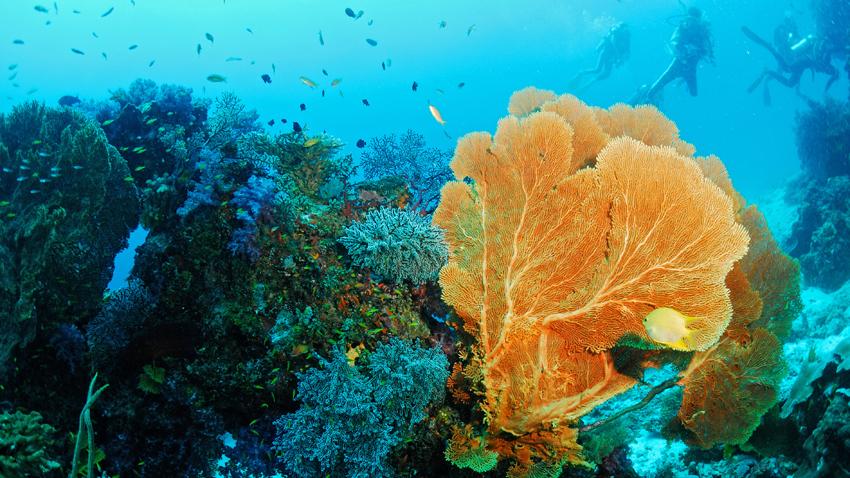 Similan Islands diving